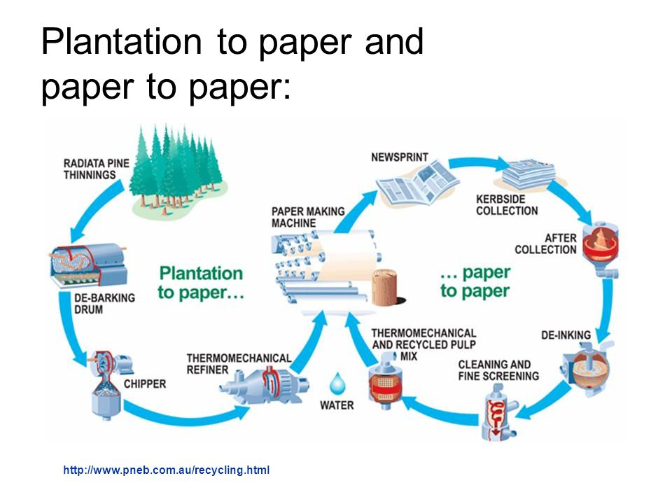 plantation to paper