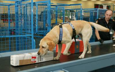 PTE听力口语练习-科学60秒: Dogs' Sniffing Skills inspire Detector Development