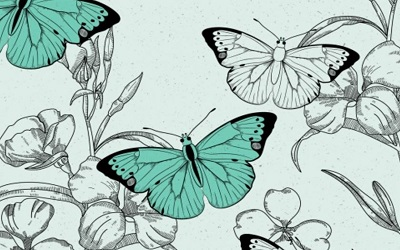 PTE听力口语-科学60秒:Butterfly Shows Speciation Sign